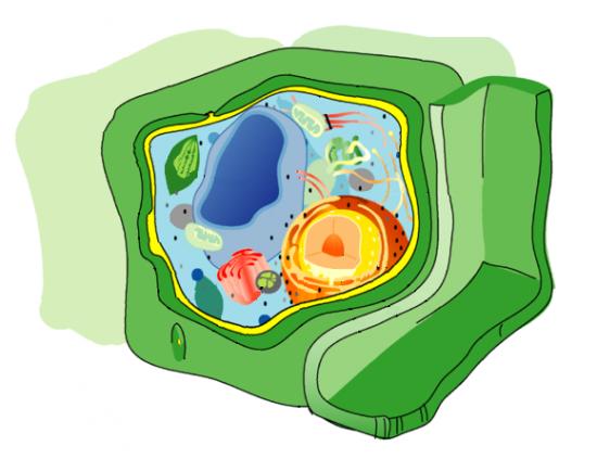 Komórka eukariotyczna.