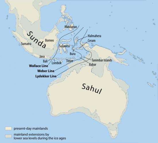 Linia Wallace'a na tle linii brzegowej sprzed 20 tys. lat.
