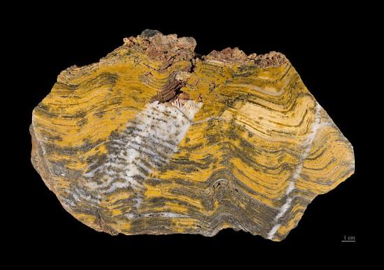 Stromatolity z formacji Strelley Pool w Australii.