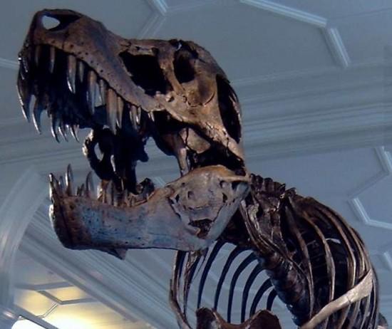 Szkielet tyranozaura w muzeum w Manchesterze.