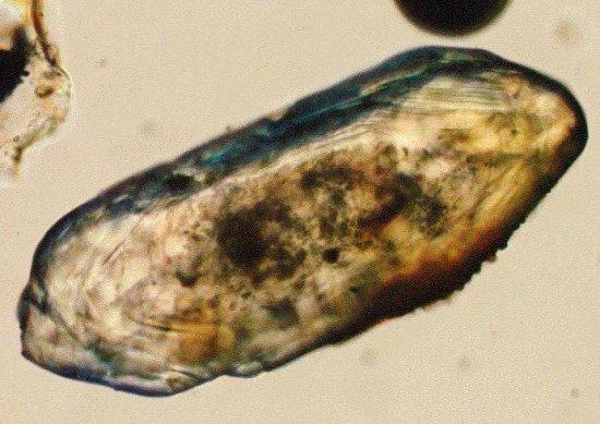 Cyrkon pod mikroskopem.