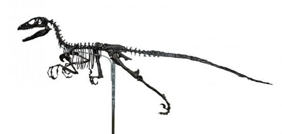 Deinonychus - rekonstrukcja według koncepcji Ostroma.