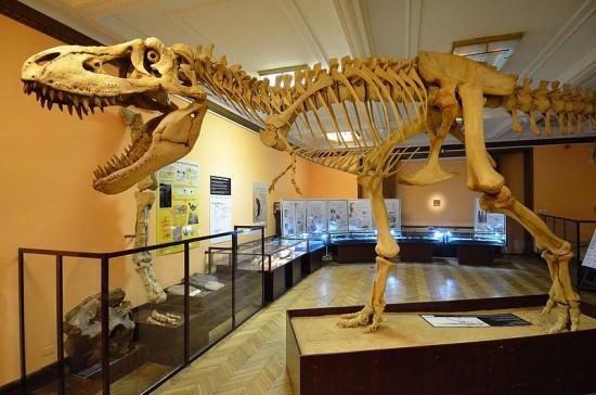 Muzeum Ewolucji w Warszawie