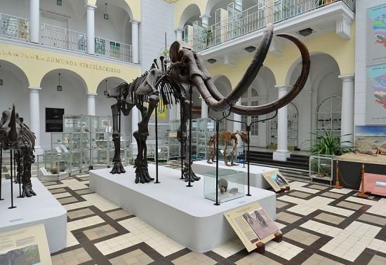 Muzeum Geologiczne w Warszawie.