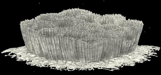 Rekonstrukcja paleozoicznych koralowców z grupy denkowców, a dokładniej – rodzaju <i><p class=