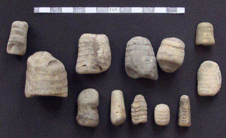 Skamieniałości muszli łodzikowatych (tak zwanych ortocerasów i endocerasów) znalezionych w Obornikach Wielkopolskich, w osadach polodowcowych.