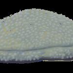 Gąbka z wymarłej grupy stromatoporoidów (rys. Edyta Felcyn).