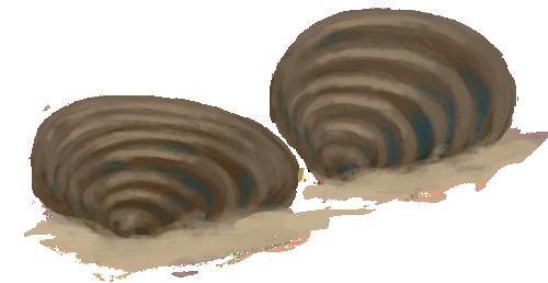 Kredowe małże z rodzaju Inoceramus. Rys. Edyta Felcyn.