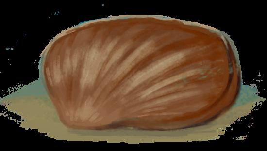Ramienionóg Lacusonella (jura). Rys. Edyta Felcyn.