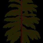 Voltzia (rośliny szpilkowe) z permu. Rys. Edyta Felcyn.