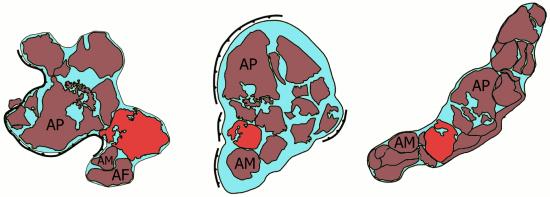 Mapy kontynentu Nuna (Kolumbia), który istniał około 1,8-1,3 miliarda lat temu.
