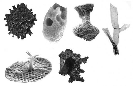 Mikroskamieniałości proterozoiku.