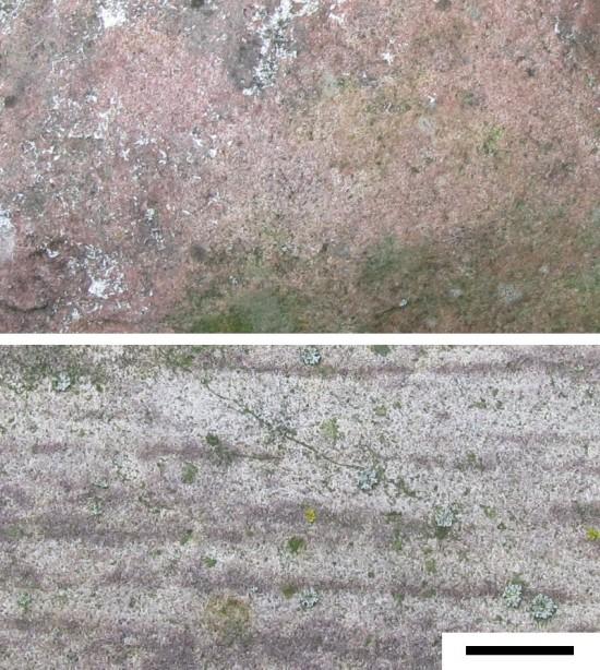 Czerwone piaskowce z Dalarny (Skandynawia). Pasek skali: 1 cm.
