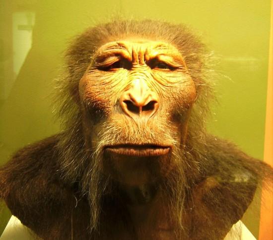 Paranthropus boisei.