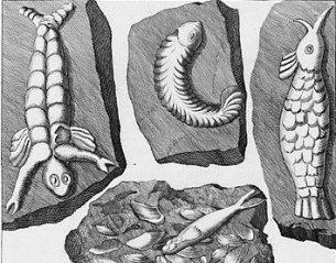 Tak mylą się paleontolodzy