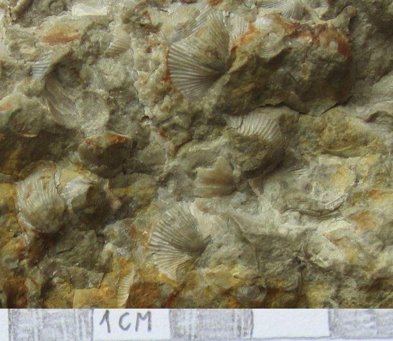 Pierwsze kroki w paleontologii, czyli jak szukać skamieniałości?