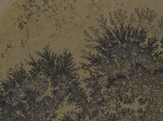 Dendryty (nacieki) manganowe - fałszywa skamieniałość.