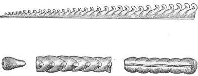 Schemat skamieniałości graptolita.