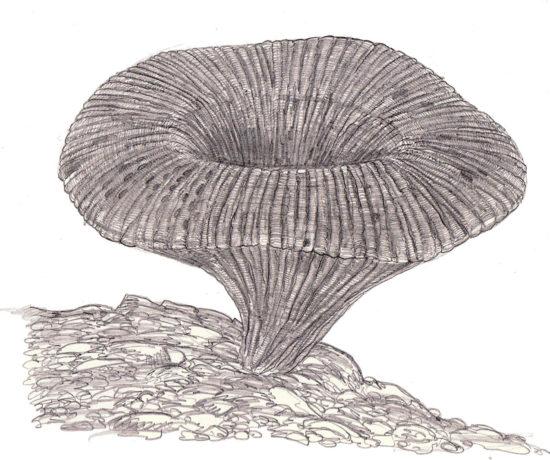 Rekonstrukcja jurajskiej gąbki z rodzaju Cnemidiastrum (rys. Jakub Kowalski).