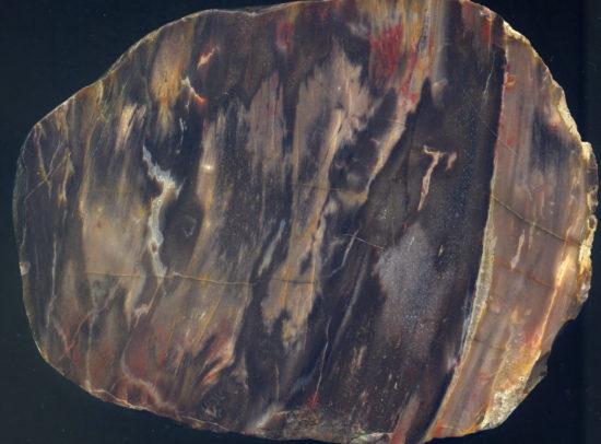 Skrzemieniałe drewno z ery paleozoicznej (przełomu karbonu i permu).