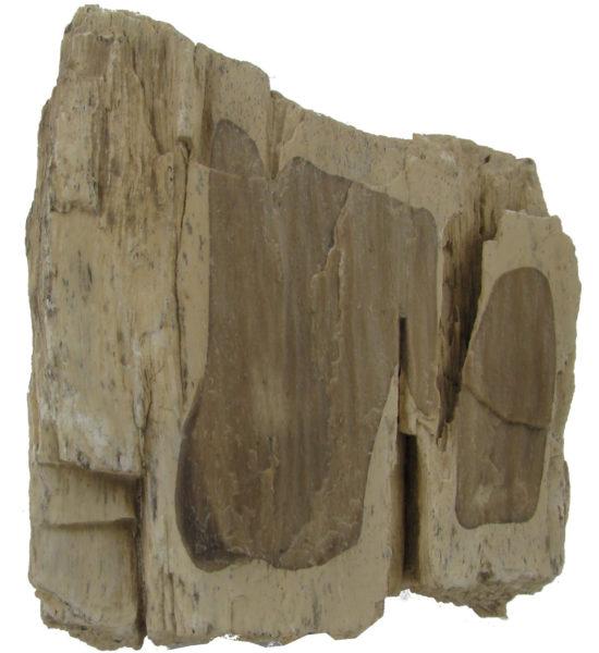 Skamieniałe drewno z Roztocza.