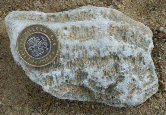 Skamieniałość koralowca denkowego (Tabulata) z syluru.