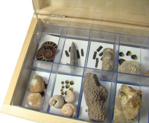 Zestaw skamieniałości (zaawansowany) do nauki rozpoznawania polskich skamieniałości - amonitów, belemnitów, małży.