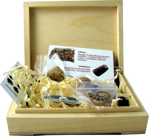 Zestaw skamieniałości (podstawowy) - amonit, belemnit, ząb rekina.