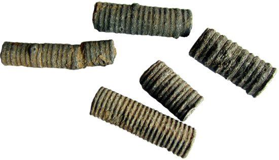 Skamieniałości fragmentów łodyg liliowców, pochodzące z Maroka.