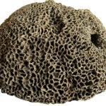 Skamieniała kolonia koralowców denkowych z rodzaju Halysites.
