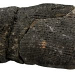 Pień kalamita - gigantycznego skrzypu z okresu karbońskiego.