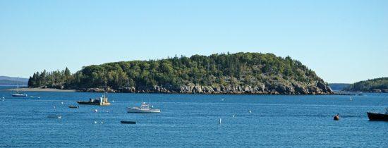 Muton z Acadia National Park (Maine, USA).