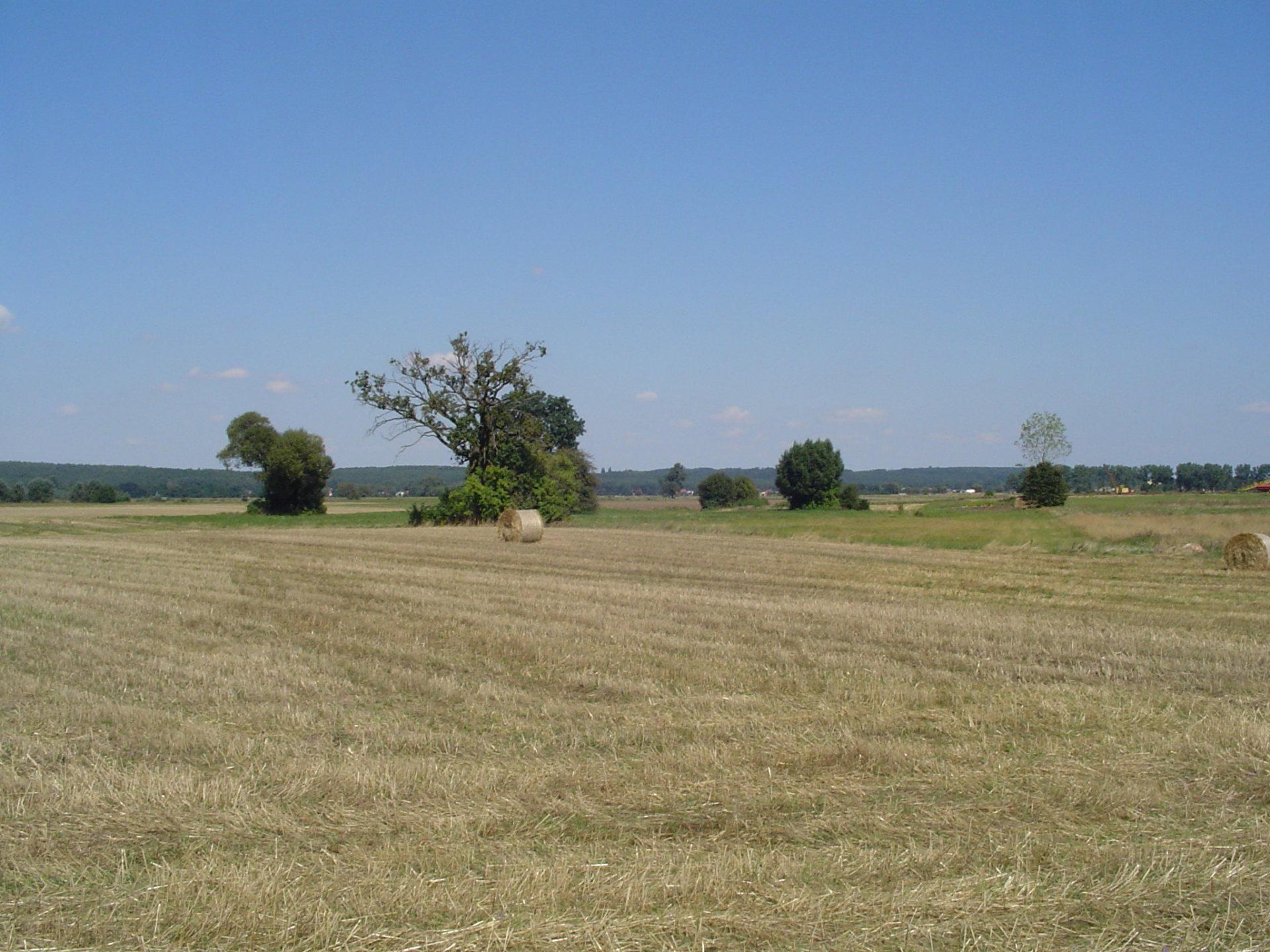 Równinne dno pradoliny warszawsko-berlińskiej w rejonie Kościana (Wielkopolska).