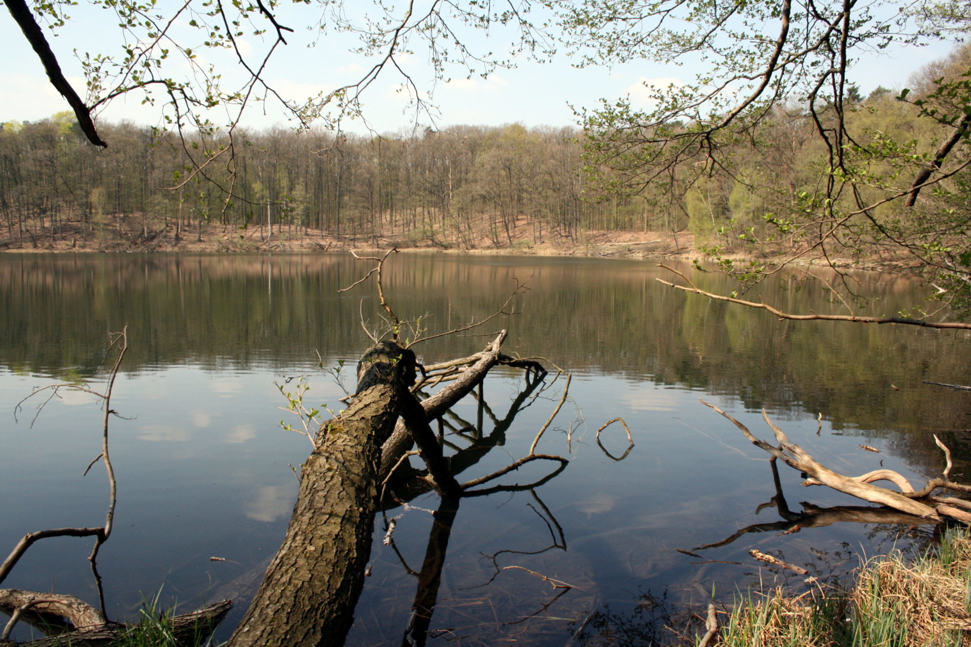 Jeziora w zagłębieniach bezodpływowych na terenach ostatniego zlodowacenia często mają okrągły zarys. Jezioro Kociołek w Wielkopolskim Parku Narodowym.